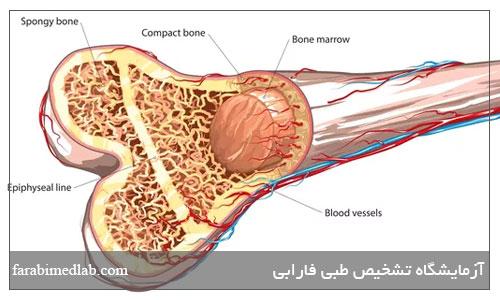 پیوند مغز استخوان